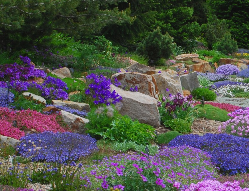 alpine perennials  the perfect rock garden companion  powerful, Beautiful flower